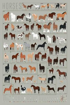 Dog Breeds Horses: A Chart of Notable Breeds - Saddle up with this thorough(bred)ly researched print depicting over 70 magnificent horses! Pony up and snag one of these beauties quick—they may not be available furlong! Horse Markings, Horse Facts, Types Of Horses, Equestrian Outfits, Horse Pictures, Horse Care, Horseback Riding, Horse Riding, Beautiful Horses