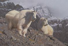 Daniel Smith wildlife artist