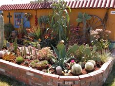 What a small beautiful cactus garden!  Lots of variety.