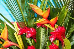 #tropical paradise