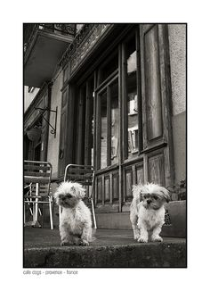 DOGS AT A CAFE IN PROVENCE