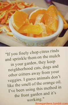 Organic Vegetable Garden Tip.  Oh I will be trying this the animals in my neighborhood think my front planters are their pooping stations.  I will fool them