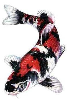 Japanische tattoo kunst fische and r cken t towierung on for Japanese koi centre