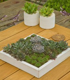beach style patio by Living Gardens Landscape Design Succulents in a painted wood frame Succulent Landscaping, Succulent Gardening, Planting Succulents, Garden Landscaping, Succulents Diy, Design Cour, Succulent Display, Front Yard Design, White Plants