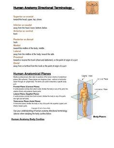 Worksheets Skin Diagram For Teacher - DIY Enthusiasts Wiring Diagrams •