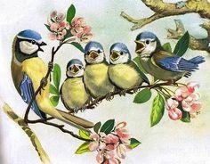 Postcard sent to Germany Watercolor Bird, Watercolor Paintings, Illustration Blume, Bird Drawings, Bird Pictures, Vintage Birds, Bird Prints, Bird Art, Beautiful Birds