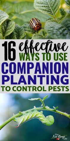 Companion planting is a great way to reduce pests in your organic garden. Here are 16 ways to use companion planting for pest control using herbs, trap cropping, and other companion planting techniques to get rid of bugs in the vegetable garden! Garden Care, Garden Bed, Gardening Supplies, Organic Gardening Tips, Vegetable Gardening, Gardening Books, Organic Compost, Urban Gardening, Garden Compost