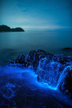 Visit Japan: Seasonal lightshow: Sea fireflies are relatively common on sandy beaches in the Seto Inland Sea throughout summer. Beautiful Nature Wallpaper, Beautiful Landscapes, Beautiful Ocean, Beautiful Places To Travel, Cool Places To Visit, Aesthetic Backgrounds, Aesthetic Wallpapers, Pretty Backgrounds, Nature Pictures