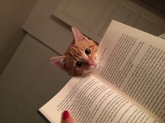 Oh, were you reading?