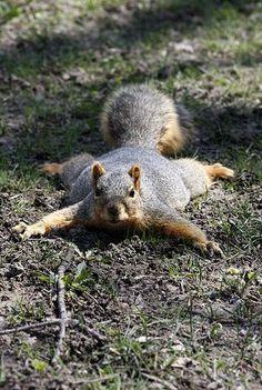 Stalker squirrel