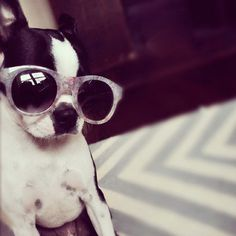 Lola why cant you be as cute as this dog on a daily basis!