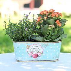 Beautiful additions to our spring range our Vintage Flower garden collection. A pretty windowsill planter which is made from tin with an attractive vintage pattern to the front consisting of roses and a dainty butterfly, printed onto a contrasting polka dot background on a duck egg blue base with vintage stamp and classical handwriting on the sides of the planter.   This quirky planter is the perfect way to add a touch of the outside when space is limited, fits perfectly on a windowsill or…
