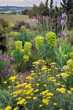 Achillea (Yarrow) in front of Euphorbia caracias (looks like Wulfenii) - RHS Hyde Hall Gardens, Essex, England Dry Garden, Gravel Garden, Garden Landscaping, Garden Path, Essex Countryside, England Countryside, Landscape Design, Garden Design, Drought Tolerant Garden