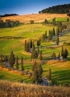 A Plus Photos: Toscana Strada ~ Tuscany, central Italy by Inge Johnsson Siena Toscana, Places To Travel, Places To See, Wonderful Places, Beautiful Places, Beautiful Beautiful, Under The Tuscan Sun, Tuscany Italy, Sorrento Italy