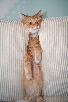 funny-cats-dogs-stuck-furniture-32