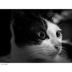 #myphoto #photograph #photography #photographyislife  #instagram #cat #catlovers #funanimal #animal #animalbehaviour #cute #fun #nicepic #focuslense #focus #zoom #monochrome #sweet #photo #nice #felixcatus http://tipsrazzi.com/ipost/1524440789655151391/?code=BUn5tJEguMf