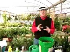 How to easily make compost tea...tho he doesn't mention using pantyhose as a compost 'tea bag'. Good idea if you want to avoid straining the tea later.