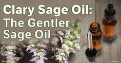 Clary sage oil is a calming oil with a wide range of benefits – discover its many uses, particularly for helping fight anxiety. http://articles.mercola.com/herbal-oils/clary-sage-oil.aspx