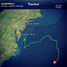 5ft 103lb #MakoShark pinged in offshore and headed south into #NorthCarolina waters.