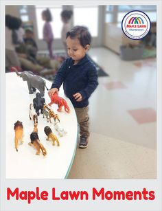 Our Lil champs used a small selection of animals familiar to him for vocabulary work and exploration. Enroll Now And Get Your Early Bird Registration Discount and Call Us Chantilly At- (703) 955-7202 Visit here: http://maplelawnmontessori.com/ #Chantilly #Virginia #Learning #EarlyEducation Maple Lawn Montessori