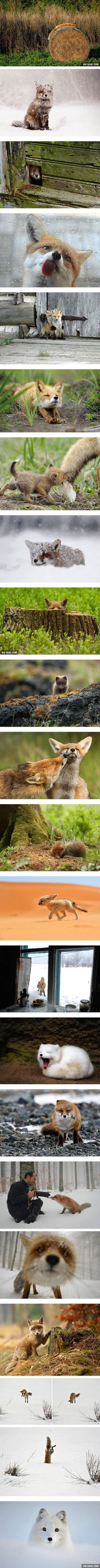 22 Photos Make You Fall In Love With Foxes (#2,8,11 By Roeselien Raimond )