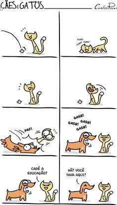 Cães e Gatos – Cada um com o seu jeito de brincar