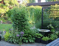 Swedish Garden by Anna Kram. More images on her blog.