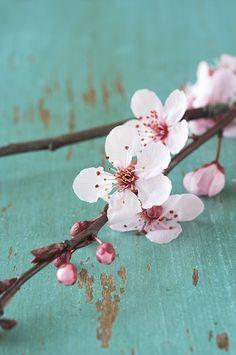 2015 - Wauw! Wat een prachtige Japanse bloesem. Deze kaart zit in de collectie 'altijd goed'.