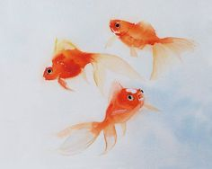 This is an archival giclee print of my original watercolor painting of three swimming Goldfishes.  The image size of this artwork(shown) is