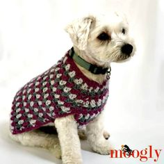 The Well Dressed Dog Coat is ready to perk up your pet with gorgeous colors – and a stitch pattern that's both familiar and fun! And there's a matching cowl too! Disclaimer: This post includes affiliate links; yarn provided by Lion Brand. The Well Dressed Crochet Dog Sweater Free Pattern, Dog Sweater Pattern, Crochet Coat, Dog Pattern, Free Crochet, Crochet Patterns, Dog Crochet, Crochet Stitches, Sweater Patterns