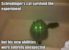 Browse the best of our 'Schrodinger's Cat' image gallery and vote for your favorite! Schrodingers Cat, Kitty Cats, Funny Kitties, Ragdoll Kittens, Adorable Kittens, Funny Dogs, Cat Jokes, Cat Humour, Bad Cats