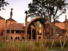 "Located adjacent to Disney's Animal Kingdom theme park, the Animal Kingdom Lodge has views of a 46-acre savannah complete with free-roaming creatures—yes, a giraffe or impala may stop by to visit your balcony as you drink your morning coffee. Called ""one of the most unique hotels in the United States"" by one reader, the resort features hand-carved furnishings, African art, and two full-service restaurants serving African-inspired cuisine."