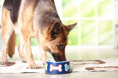 The meat-and-potatoes on senior dog nutrition