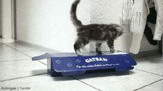 Catch me! I'm here!