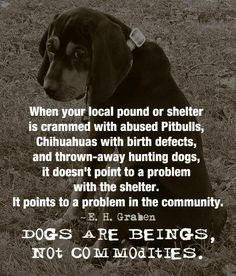 Is there a problem in your community? Volunteer. Donate. Foster. Rescue. ADOPT your next furry friend..... be part of the solution!