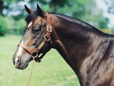Danzig (1997-2006) A legend in the barn.