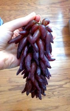 "These strange grapes, which are apparently very sweet and juicy, were developed by a specialty vineyard in California called Grapery. | This Summer's Hottest Fruit Is ""Witch Fingers"""
