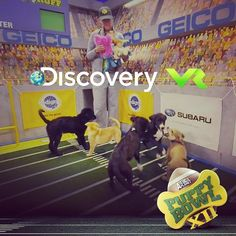 An awesome Virtual Reality pic! CUTE ALERT: You can now experience Puppy Bowl Virtual Reality. Click the link in our bio or download the Discovery VR app. Watch #PuppyBowl Feb 7 on #AnimalPlanet!  #puppies #virtualreality #vr #cute #discoveryvr #puppy #dog #dogs #pups by animalplanet check us out: http://bit.ly/1KyLetq