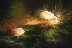 """"""" I am...a mushroom; On whom the dew of heaven drops now and then""""  --John Ford ---------             These particular mushrooms were shot in a patch of woods along the Lake Michigan shoreline in Jacksonport, Door County, Wisconsin and then digitally enhanced / painted in Photoshop.   Copyright 2014 Scott Norris Photography  www.scottnorrisphotography.com"""