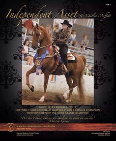 Independent Asset American Saddlebred, Western Tack, Western Pleasure, Modern Pictures, Horse Breeds, Show Horses, Horse Stuff, Beautiful Horses, St Louis