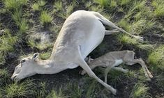 The terrifying phenomenon that is pushing species towards extinction | Environment | The Guardian
