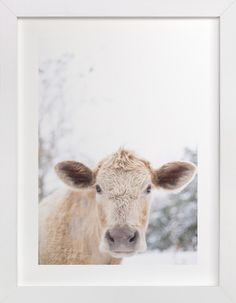 moo cow by Emily Gilbert at minted.com