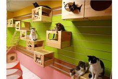 お家でのんびり過ごす猫たちですが、時には運動が必要なもの。 「Modular Cat Climbing Wall」なら壁一面がキャットウォークになるので、猫たちの運動不足解消にもってこいです。 しかも、カスタマイズできるので、デザインは自由自在! 猫が飽きることもなさそうです。 アルミハンガープレートを壁に取り付けて、...