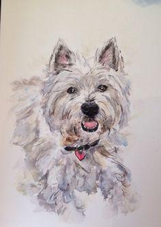 Westie...watercolour on paper by Sheila Horrocks