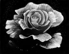 Learn to Paint Dewy Rose Black and White tonight at Paint Nite! Our artists know exactly how to teach painters of all levels - give it a try!