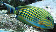 Bildergebnis für fisch bilder