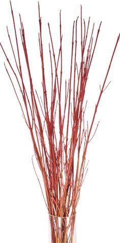 Red Dogwood Twigs - Littleflowers Farm