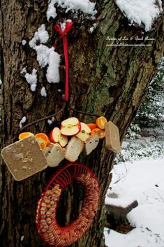 Rake Bird Buffet - skewered fruit, bread, suet and a hanging peanut feeder will satisfy many different guests