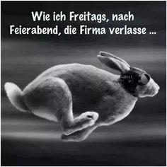 Die 512 Besten Bilder Von Freitag Good Morning Happy Friday Und