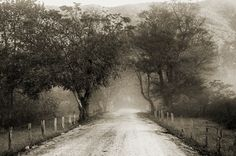 black and white photography / landscape / rustic /  rural / country road / fog / Sparks Lane / 16 x 10.5. $80.00, via Etsy.